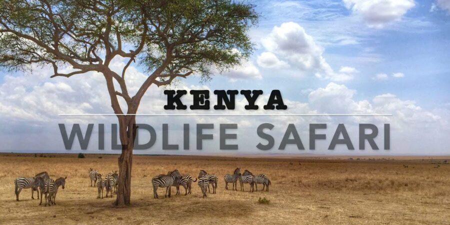 The 5 Best Destination to Visit During a Business Trip to kenya