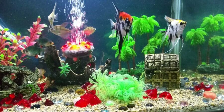 Aquarium Accessories And Supplies For Your Fish Tank