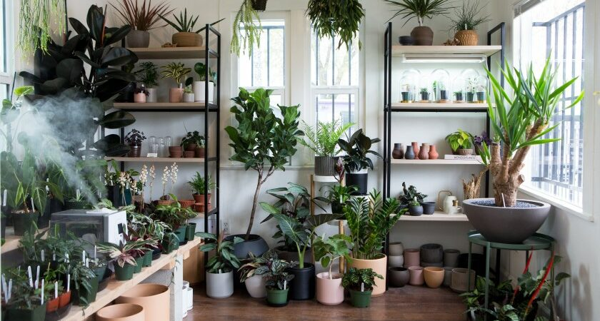 Purify Indoor Air With The Best Quality Anthurium Plants